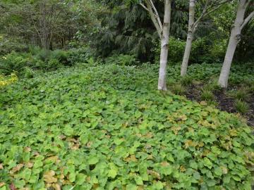 Půdopokryvné rostliny náhrada trávníku